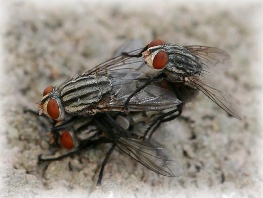 До чого сняться мухи?