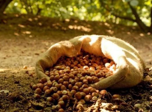 Як сушити горіхи?