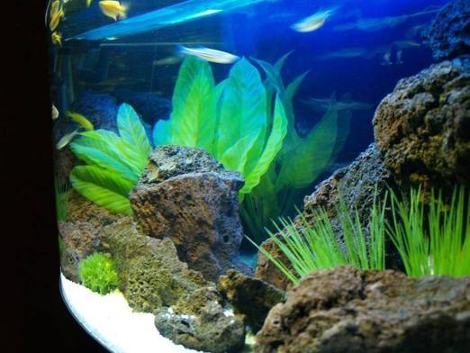Скільки відстоювати воду для акваріума?