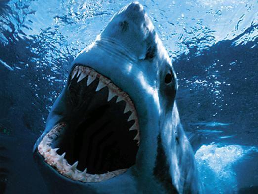 Скільки зубів у акули?